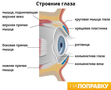 Симптомы и лечение вирусного и аллергического конъюнктивита ...
