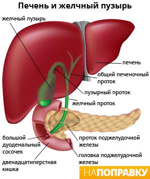 Гепатит а изменения в крови